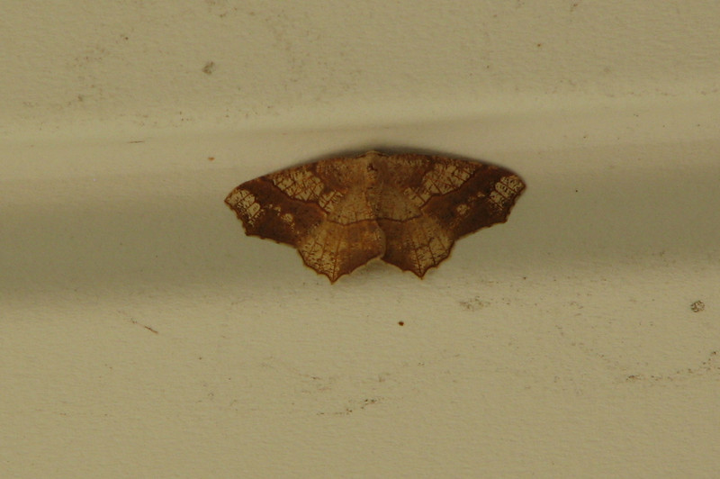 Moth on Front Porch Ceiling