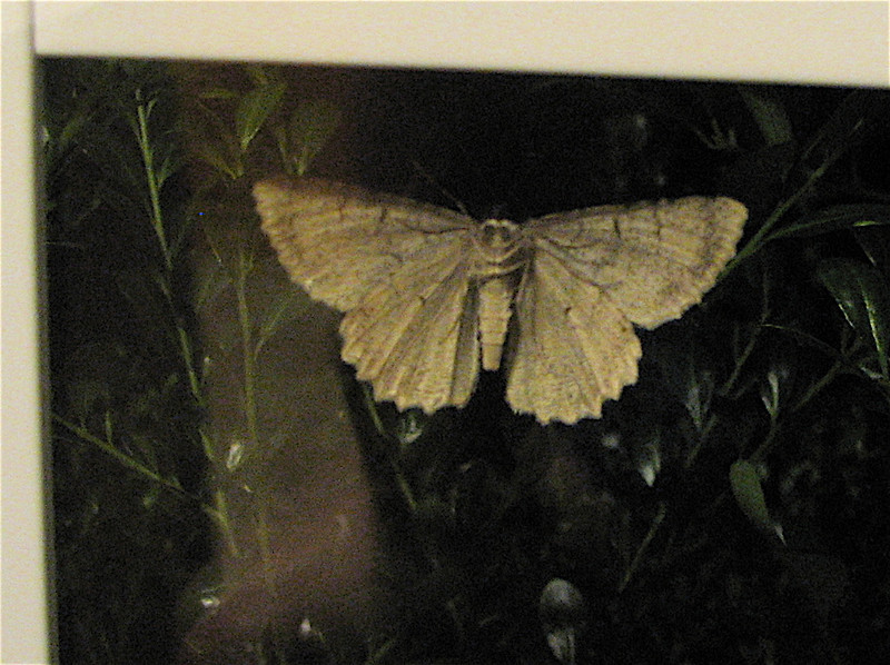 Look At Those Beady Moth Eyes - On Kitchen Window At Night