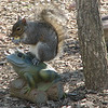 Squirrel Eating Acorn on Frog Statuary