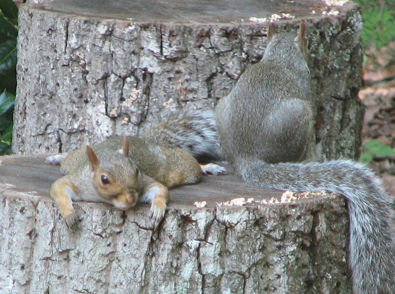Chillin Squirrels