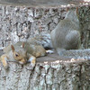 Chillin Squirrels