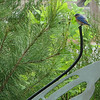 Bluebird on Butterfly Bench - Our Mascot
