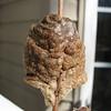 Praying Mantis Egg Case Found While Cutting Back Mums - March 11, 2007