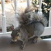 What Unusual Coloring for This Unusual Squirrel