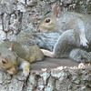 Squirrel Workout - These Stretching Exercises Are Murder