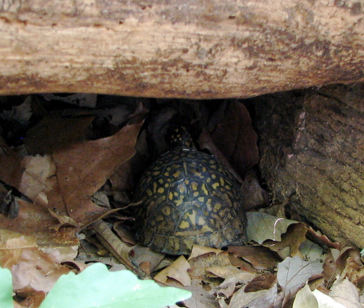 Turtle in the Rear Woods Log Garage