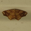Looks Like a Work of Art - Moth on Front Porch Ceiling