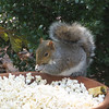 Wildlife Entertainment Is The Best - Squirrel