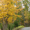 Fall Colors Along Driveway