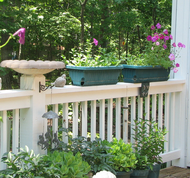 Morning on Our Deck is Blooming Up - June 7