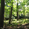 From Hammock Looking Towards Back of House - Brush Pile for Critters in Foreground