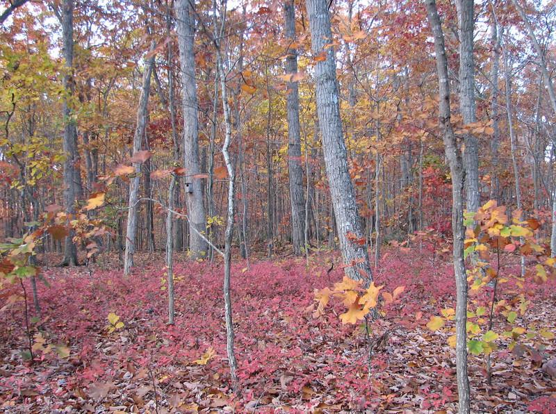 Backyard Woods November 16