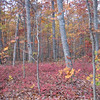Backyard Woods November 16