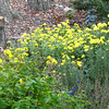 Fall Garden Blooms With New Seats From Neighbor's Tree - Nov. 14