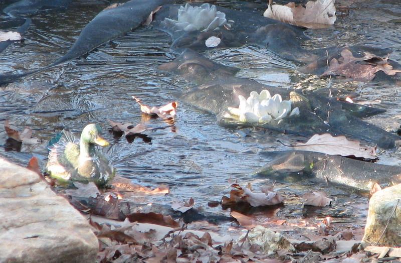 The Frozen Pond - Jan. 10