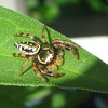 Spider On Leaf On Deck_2