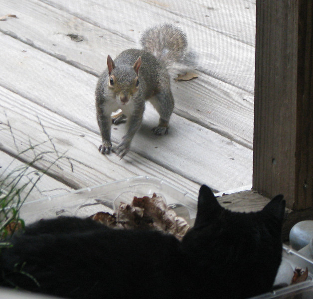 Squirrel and Squeek