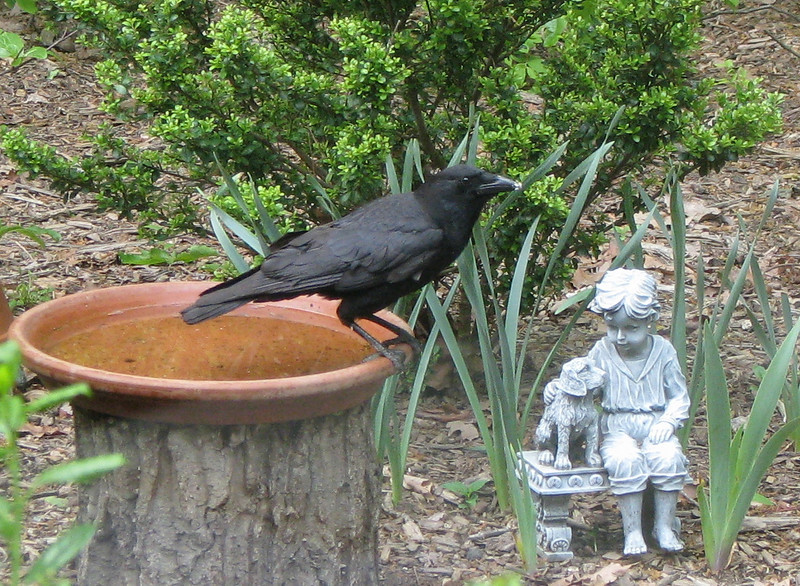 Crow Conversing With Girl and Dog