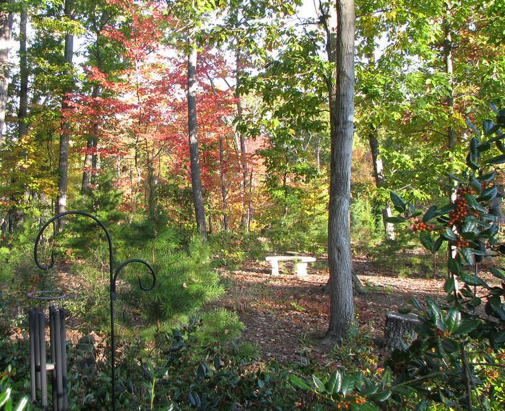 Front Yard - Fall 2008