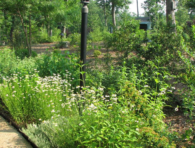 Walkway Garden - June 10