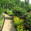 Front Walkway - June Garden