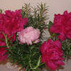 Peonies With Rosemary