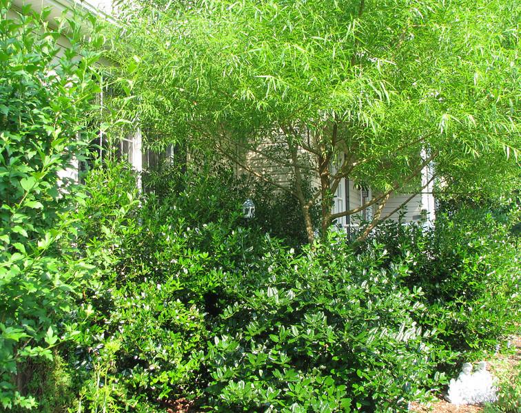 Jungle Area - June 10