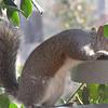 Squirrel at Birdbath