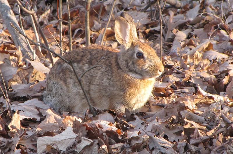 Rabbit Watching Sunset