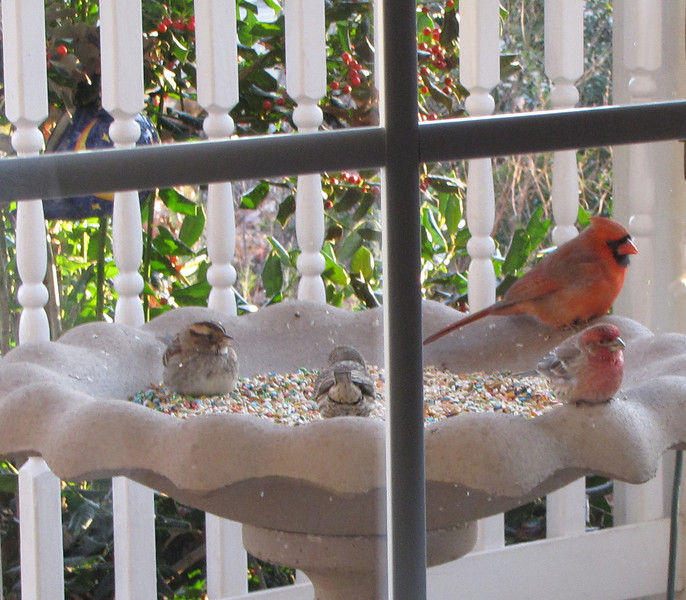 Winter Porch Feeder with Sparrow, Finches and Cardinal