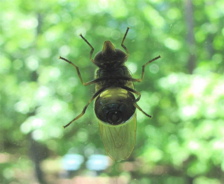 Photo Taken Inside Glass Of Bug On Outside Of Window