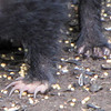 Skunk Feet and Claws