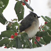 Snowy Day for Titmouse