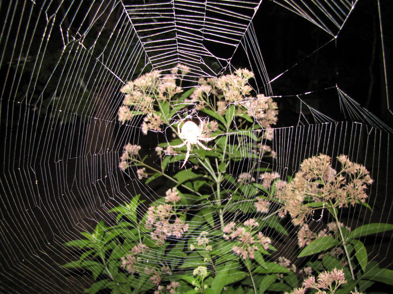 Spider on Deck at Night