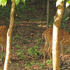 Fawns In Back Yard - Baby Deer Are SOOO Cute