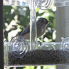 Tufted Titmouse on New Window Feeder for Front Porch