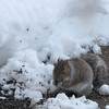 Snowy Day Squirrel
