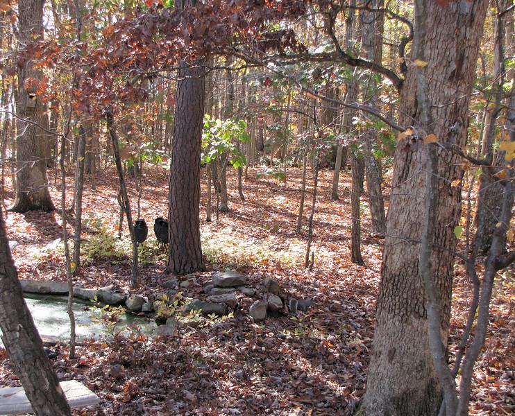Autumn Back Woods