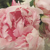 Peonies - Favorite Flower We Grow