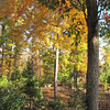 Front Porch View of Autumn Colors  10-25-09