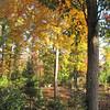 Front Porch View of Autumn Colors  10-25-09