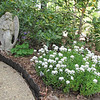 Angel, Purple Columbines and Candytuft