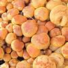 Close-up of Mushroom Cluster