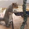 Squirrel Smiles are So Special