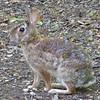 Our Little Rabbit - Unique Markings