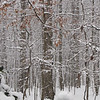 Snow in the Back Woods