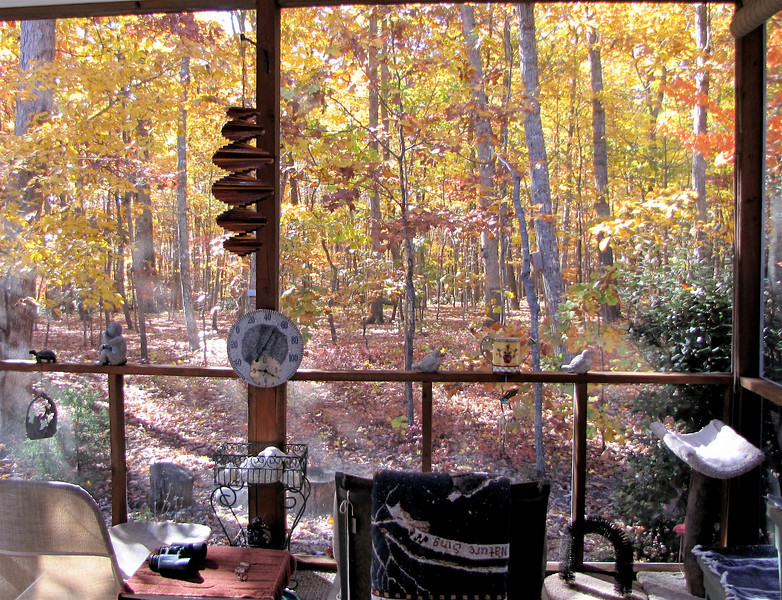 Autumn View From The Screened Porch