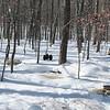 Winter Views of Back Yard Snow