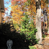 Fall Colors and Favored Wind Chimes From Front Walkway