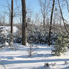 Winter Snow at Bluebird Cove - Front Yard
